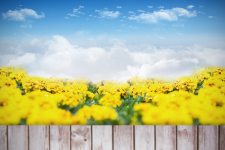 planks: Yellow flowers against wooden planks