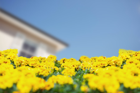 nice house: Yellow flowers against house with the sky in the background Stock Photo