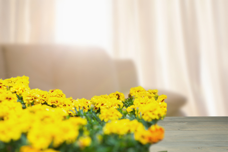 domicile: Yellow flowers against light shining into living room Stock Photo