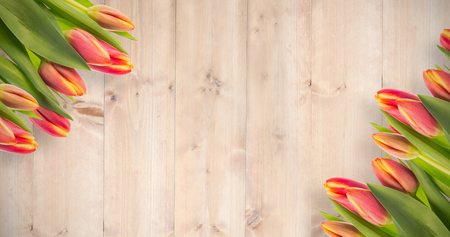 wooden planks: Tulip against wooden planks