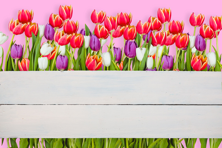 planks: Flowers against painted blue wooden planks