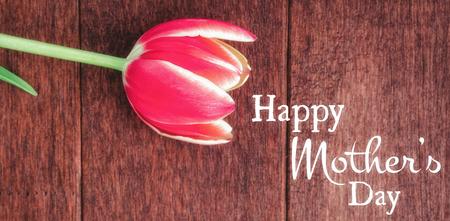 oracion: La condena contra las flores del tulip�n