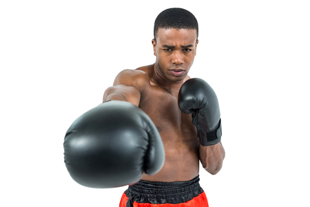 upright: Boxer performing upright stance on white background
