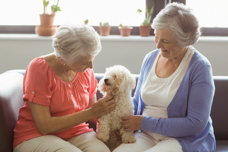 stroking: Senior women stroking a dog in a retirement home Stock Photo