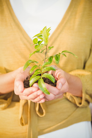 swivel: Business woman showing a plant at work Stock Photo