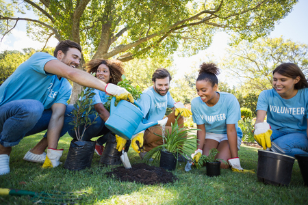 Group of volunteer planting in park