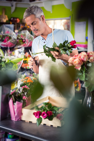 trimming: Male florist trimming stems of flowers at his flower shop