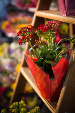 plant pots: Close-up of plant pots on ladder at flower shop