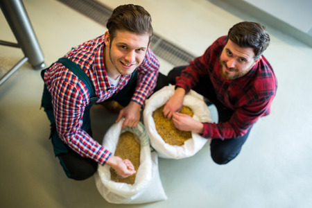 brewers: Brewers examining grains at brewery factory