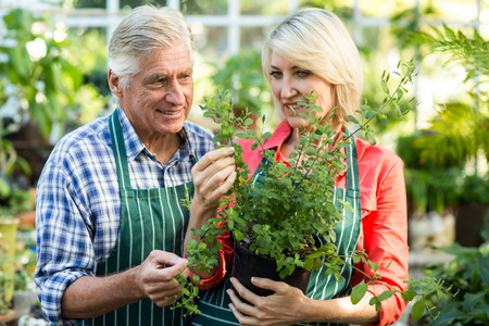 potted plant: Couple holding potted plant while working at greenhouse
