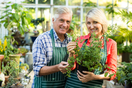 potted plant: Happy couple holding potted plant while standing in greenhouse Stock Photo