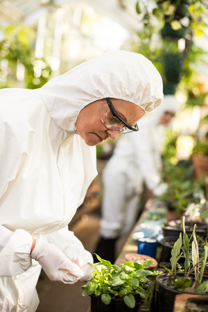 potted plant: Side view of female scientist in clean suit examining potted plant at greenhouse Stock Photo