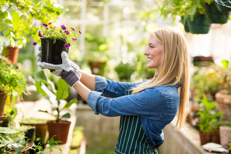 flowering plant: Side view of young female gardener holding potted flowering plant at greenhouse