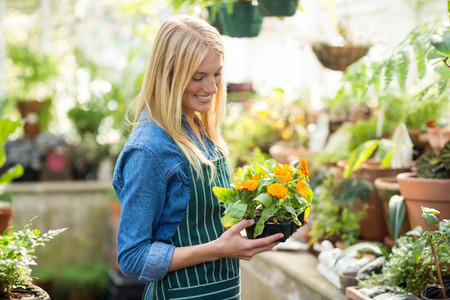 potted plant: Side view of female gardener holding potted plant at greenhouse Stock Photo