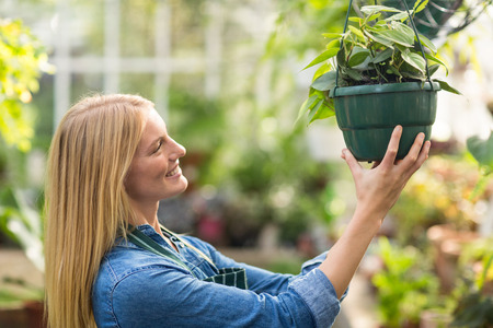 potted plant: Side view of young woman hanging potted plant at greenhouse Stock Photo