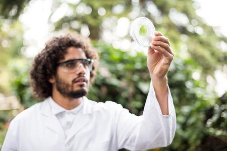 petri dish: Male scientist examining leaf on petri dish at greenhouse