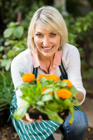 flowering plant: Portrait of happy female gardener showing potted flowering plant at greenhouse