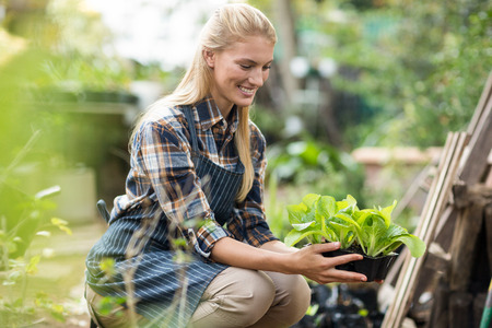 potted plant: Side view of smiling female gardener holding potted plant Stock Photo