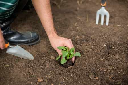 cropped: Cropped image of gardener planting at greenhouse