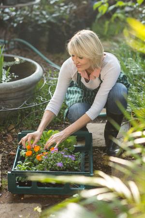arranging: Female gardener arranging plants in crate at greenhouse Stock Photo