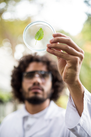 petri dish: Male scientist inspecting leaf on petri dish at greenhouse