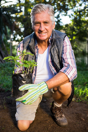 potted plant: Portrait of happy mature male gardener kneeling with potted plant at garden