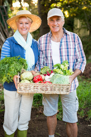 garden staff: Portrait of happy mature couple standing with fresh vegetables at garden Stock Photo
