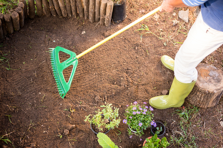 protected plant: Low section of female gardener using rake at farm
