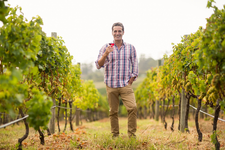 Portrait of smiling male vintner holding a glass of wine in vineyard Stock Photo