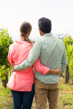 arm around: Couple standing with arm around and looking at nature in vineyard Stock Photo