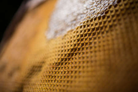 Close-up of honeycomb filled with honey