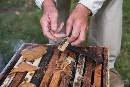 ploy: Beekeeper holding a wooden queen cage in apiary garden