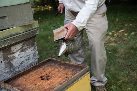 smoker: Beekeeper working with a smoker in apiary garden LANG_EVOIMAGES