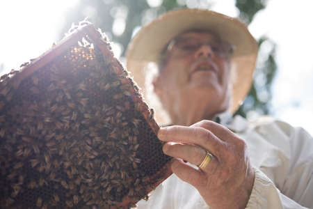 honey comb: Beekeeper holding a honey comb with bees in apiary