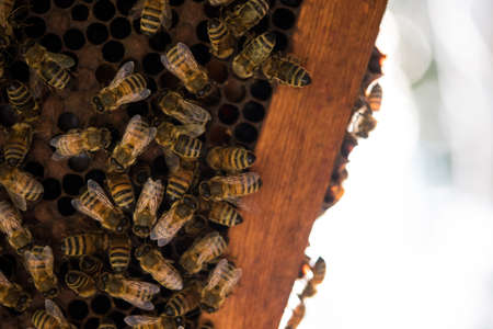 honey comb: Close-up of bees on honey comb