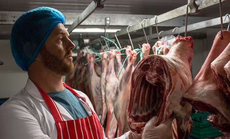 storage room: Butcher hanging red meat in storage room at butchers shop