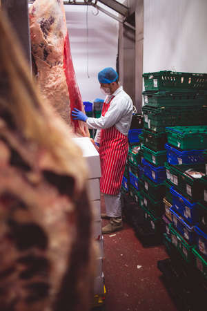 storage room: Butcher examining the red meat hanging in storage room at butchers shop