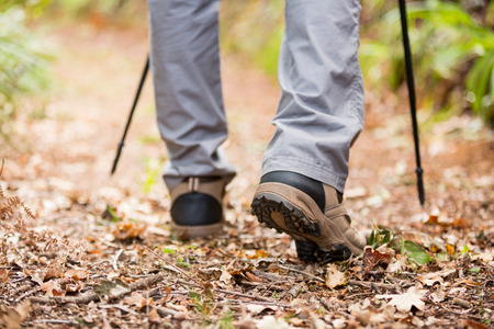 walking pole: Male hiker walking with hiking pole in forest Stock Photo