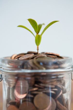 Plant growing out of coins jar against white background Stock Photo