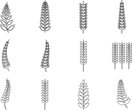 ferns: Various ferns icons on white background
