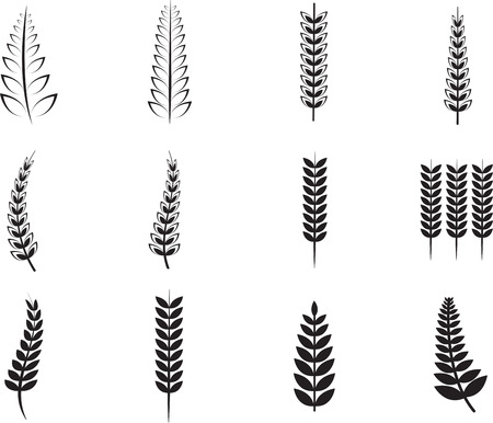 helechos: Various ferns icons on white background