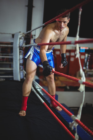 grappling: Boxer entering in boxing ring at arena