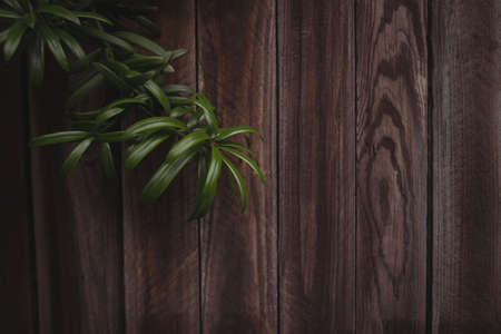 wood panelling: Close-up of wood panelling with plant twig
