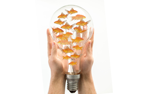 Side view of fish swimming against clear light bulb Stock Photo
