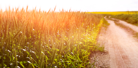 Empty path passing through fields on sunny day Stock Photo