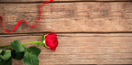red rose: red rose on the floor