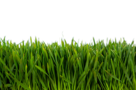 Close-up van groene gras mat Stockfoto