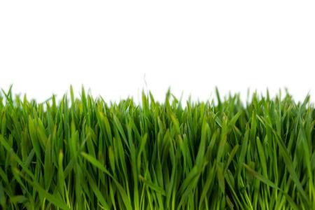 pasto sintetico: Primer plano de la alfombra de hierba verde