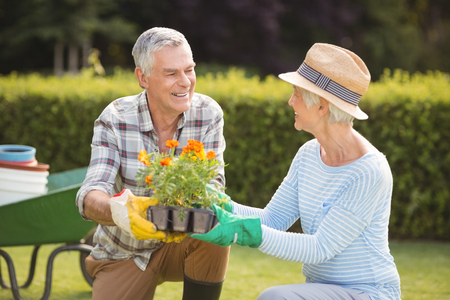 Happy senior couple gardening together in backyard Stock Photo