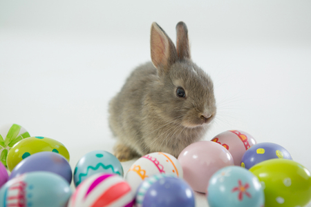 concern: Easter eggs and Easter bunny on white background